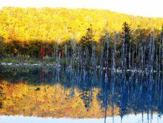 白金青い池10月